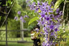 MI_34 (MULTIMAGENS) Tags: natureza caminhada ecologica