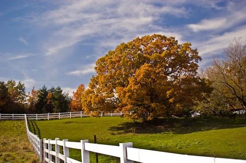 Oak Tree Pasture