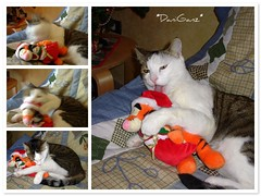 Fusillo vs Tigro (Tigger) (*DaniGanz*) Tags: santa christmas white cute collage cat catwomen toy fdsflickrtoys mosaic tabby tiger kitty photomosaic mosaico santaclaus tigger natale gatto bianco flickrtoys kittie softtoy peluche micio babbonatale tigro fusillo tigrato daniganz