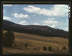 Bands of sheep on the Gravelly Range at the foot of Black Butte, Madison County, Montana  (LOC) (The Library of Congress) Tags: horses mountain mountains green nature grass vintage bush sheep slidefilm hills 1940s pasture transparency 4x5 lf libraryofcongress largeformat madisoncounty transparencies shepherds blackbutte historicalphotographs russelllee gravellyrange xmlns:dc=httppurlorgdcelements11 fielld dc:identifier=httphdllocgovlocpnpfsac1a35018 madisoncountymontana