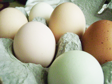 Rainbow Valley Farm eggs