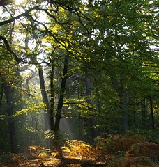 Forest (Johan_Leiden) Tags: autumn trees light sun tree fall dutch forest bomen nederland thenetherlands heemstede sunrays bos nederlands zon sunray herst zonlicht rayoflight zonnestraal zonnestralen flickrsbest pentaxk100d aplusphoto diamondclassphotographer flickrdiamond betterthangood theperfectphotographer heartsavisionhearts