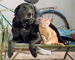 Friendship (Dr Manjit Singh) Tags: cats india love dogs beauty friendship innocence punjab coolest photoscan
