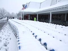 Surrey Snow #9