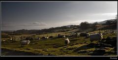 Dunlichity (Craig Robertson) Tags: field 1025fav landscape highlands explore plus dunlichity abigfave