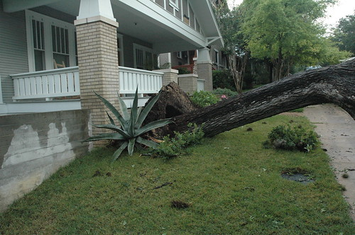 Fallen Tree Next Door