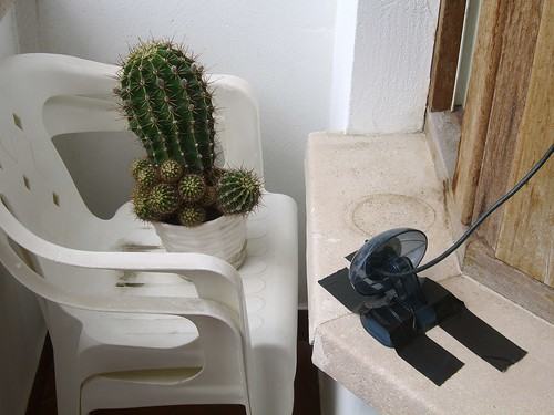 Cactus Webcam