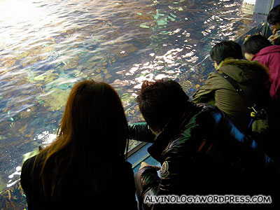 Observing the coral fish from the water surface