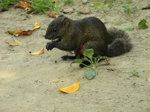 Squirrel Eating - Ta An Park