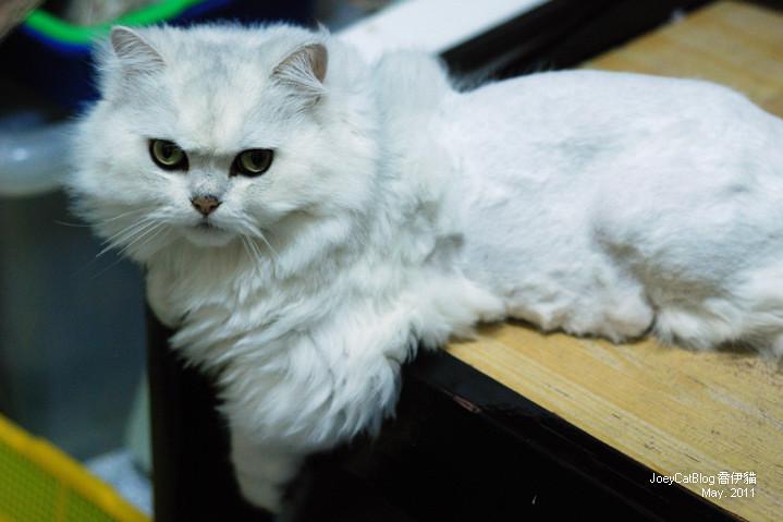 CAT_米米_2011_may__DSC_1149