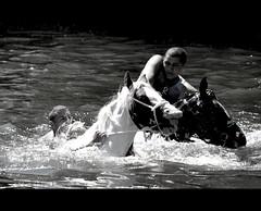 Gypsy horse fair plunge