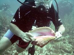 PICT0018 (JoseQ) Tags: coral mar belize caribe submarinismo