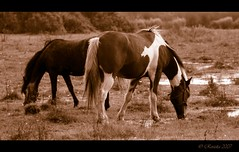 best of friends (Roszita) Tags: fab horses horse animal sepia mammal eating grazing takeabow galope naturesfinest summersday blueribbonwinner splendiferous supershot passionphotography mywinners abigfave platinumphoto anawesomeshot impressedbeauty aplusphoto superbmasterpiece ysplix scarletrose77 platinumphotography everydayissunday theperfectphotographer spectacularvisions