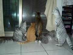 EPSN0480 (jacky elin) Tags: cats home cat kitten all 貓 2007 moly
