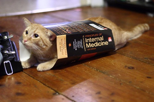 Edi poses as Harrison's Principles of Internal Medicine