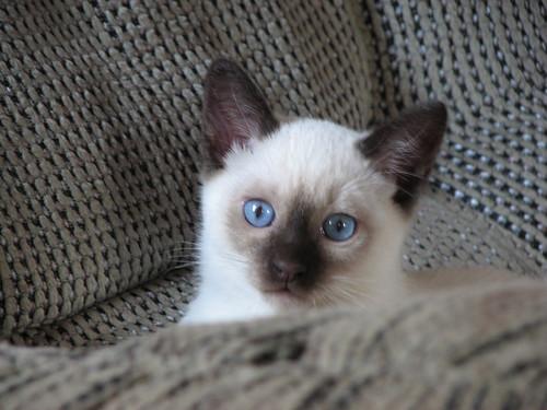 Pete Von Pretty Eyes