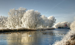 Frozen (Danil) Tags: blue winter sky white holland nature dutch landscape duck swan nikon d70s nederland newyear etc groningen 2008 soe eend 2007 landschap blabla ijs zwaan vorst rijp abigfave impressedbeauty depoffert