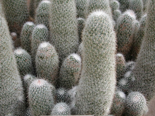 Cactii at Huntington Gardens.JPG