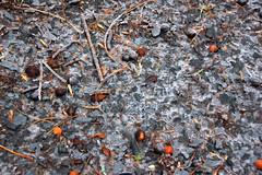 DSC_0091 (setao86) Tags: winter snow macro ice landscape frozen spring scenery frost icesickles