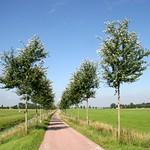 Beemster: Vrouwenweg landscape in summer