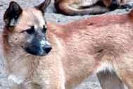 Kinship Circle - 2008-05-22 - 10 - Egypt