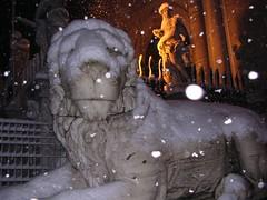 Leone con la neve
