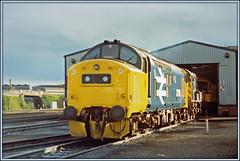 37183, Haymarket depot (Jason 87030) Tags: tractor depot growler ee englishelectric stabled 1985 scan 35mm print largelogo class37 britishrail diesel locomotive scotland bash scottish haymarket blue yellow shed engines