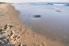 Prints (floralgal) Tags: ocean seascape beach landscape newjersey sand rocks waves footprints lbi longbeachisland southernnewjersey newjerseyshore platinumphoto