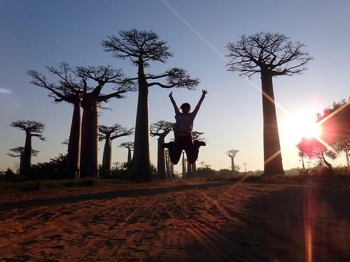 baobab17