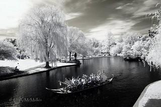 Swan Ride, Public Garden