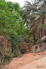 Oued Djerat (Tassili n'Ajjer) - Palmeraie de Nafeg (L'Abominable Homme de Rires) Tags: sahara rock algeria sand sable oasis algérie touareg roche désert oued djanet tassilinajjer illizi djerat