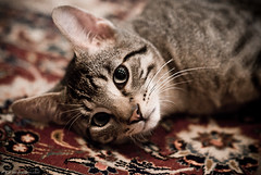 Reflection (ethervizion) Tags: pet cat floor nelson rug 85mmf14d