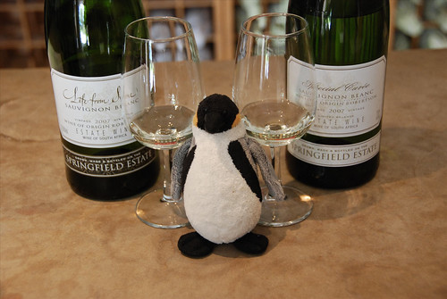 Mini Wolfgang visits Springfield Winery!
