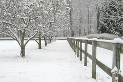Title: Snow everywhere Details: A picture of a snowy scene taken with a canon digital elph powershot SD600