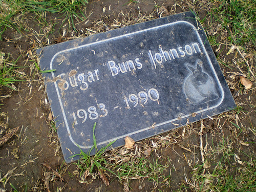 Sugar 'Buns' Johnson