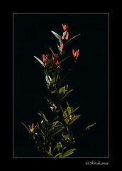 PlantBacklit