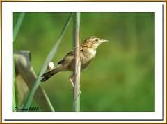 barcelona nature birds aves ocells remolar deltallobregat