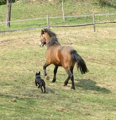 Klara & Frik (forestsoul) Tags: horses dog pets animals farm slovenia loh horsesrule forestsoul