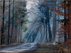 A winter forest with sunrays through mist (MyOakForest) Tags: winter light mist forest germany bayern bavaria nebel rays sunrays wald sonnenstrahle