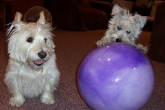 Penny & the big purple ball