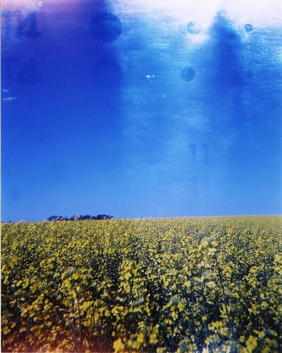 edmonton field 2003