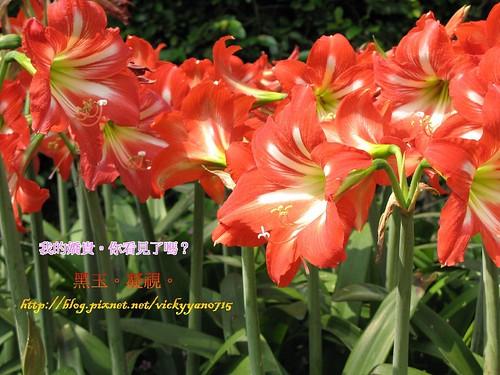 IMG_3529-1(001)