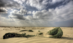 Unspoilt beach......? (Danil) Tags: ocean blue sea sky cloud holland net beach netherlands beautiful dutch grass yellow waddenzee photoshop wonderful wadden amazing sand nikon daniel tag horizon nederland noordzee rubbish waste lucht hdr friesland schiermonnikoog landschap zand wolk afval zeehond photomatix sigma1020