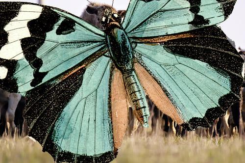 DSC_0477_0957butterfly