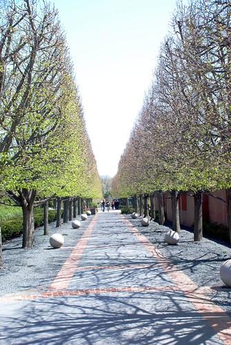 Tree path, spring