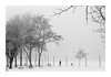 Untitled Image (Florin Aioanei) Tags: fog winter snow black white romania street florin aioanei
