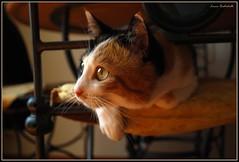 Ofy (L *) Tags: miao gatto micio ofelia gattiitaliani