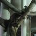 Taipei Zoo Lemurs 1