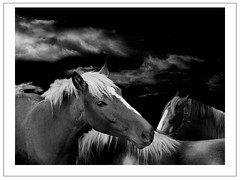 My Space (maggiedeephotographer) Tags: horses blackandwhite bw horse blancoynegro nature animal noiretblanc natureza natur group natuur natura shield schwarzweiss soe biancoenero excellence bwdreams maggiedee