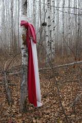 IMGP1740 (matthew s l farley) Tags: tree fabric tied foxlake